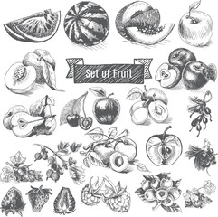 Vector illustration sketch - eco shop. Set of Fruit.