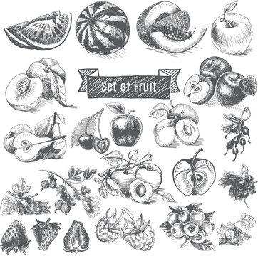 Vector illustration sketch - eco shop. Set of Fruit.