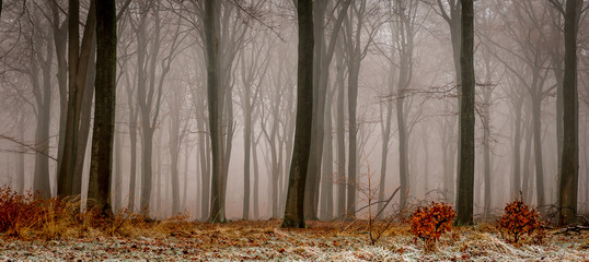 The last day of December in the woods of Planken Wambuis (Ede, Netherlands)