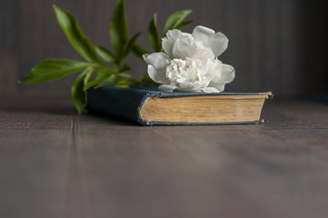 Old book with white peony