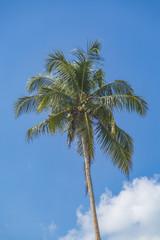 Palm on Mirissa beach in Sri Lanka