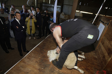 French President Emmanuel Macron watches a sheep shearing demonstration in Chateauponsac