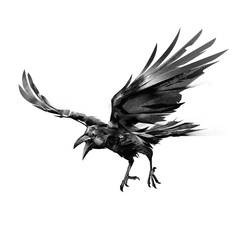drawn flying crow on white background