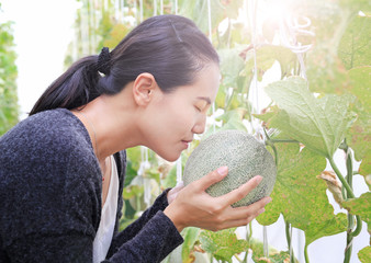 Woman hands holding and smelling melon in greenhouse melon farm.