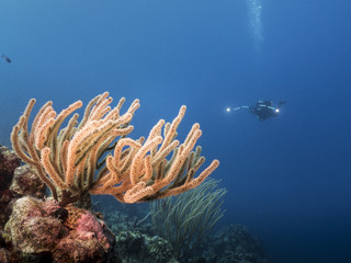 Unterwasser - Riff - Korallenriff - Weichkoralle - Schwamm - Taucher - Tauchen - Curacao - Karibik