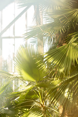 Tropical palm tree in a botanical garden grown in lab