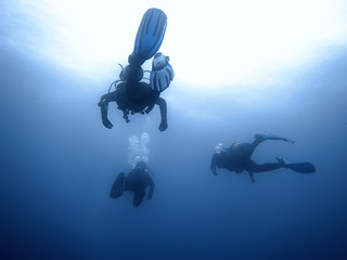 Group of divers Underwater background.