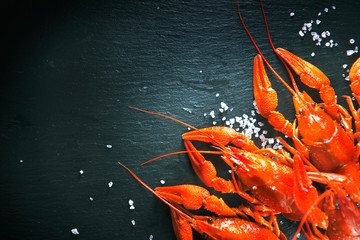 Crawfish. Red boiled crayfish with herbs on stone slate dark background