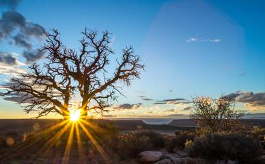 Dead tree, desert mountain sunset