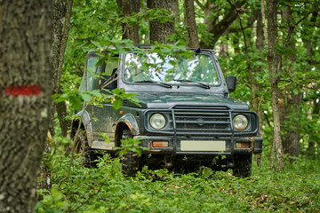 Small offroader in the forest