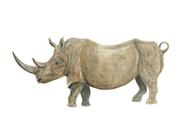 Watercolor painting rhinoceros isolated on white