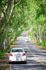 white car in tree tunnel
