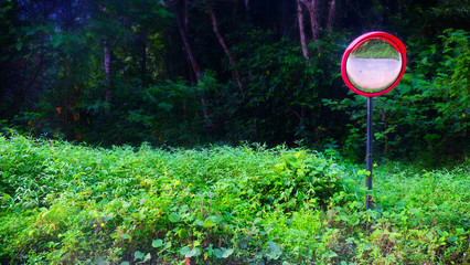 Curved glass sign in forest.