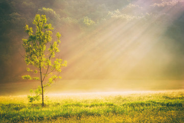 Summer grass field and tree in sunlight, golden nature background concept, sun rays, warm tones,...