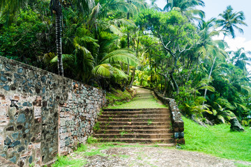 Path in a jungle at Ile Royale, one of the islands of Iles du Salut (Islands of Salvation) in French Guiana