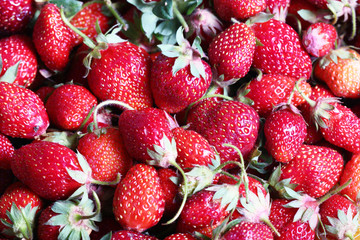 Harvest of ripe fresh red sweet strawberries as an element of food