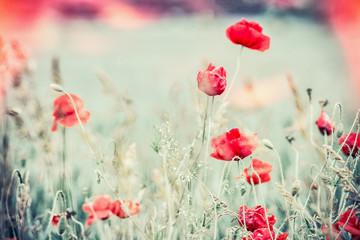 Obraz Poppies field, Beautiful nature landscape - fototapety do salonu