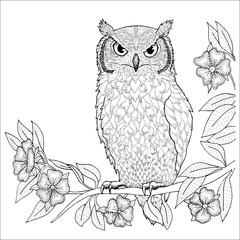 Canvas Prints Owls cartoon Owl hand drawn vector art