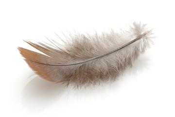 Feather Fotoväggar