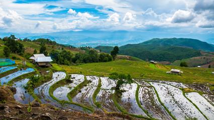 Rice field terrace in Chiangmai Thailand