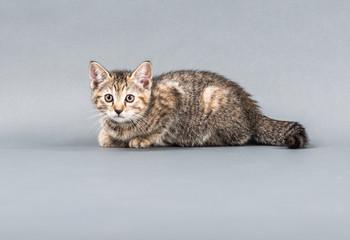 Small Kitten in a studio