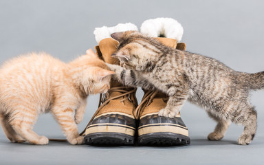 Small kittens with shoes