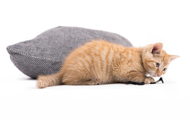 Small kitten with pillow