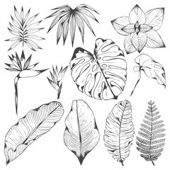 Tropical plants. Set of vector illustrations with tropical branches. Hand drawing for design