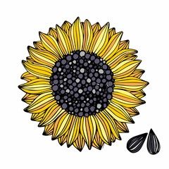 Sunflower. Vector illustration. Hand drawing for design