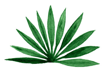 Palm leaves on white background in watercolor