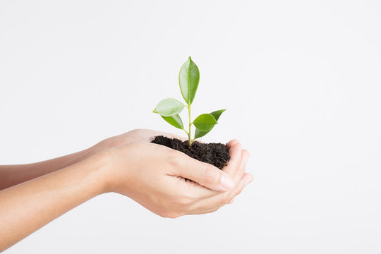 Hands holding seedling on white background , Ecology concept