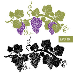 The grapes are symbols. Template. Vector isolated signs.