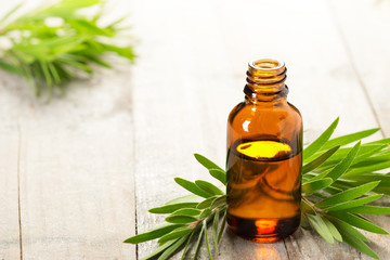 tea tree oil in the amber glass bottle and fresh tea tree leaves
