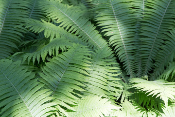 Green summer fern leaves macro pattern texture