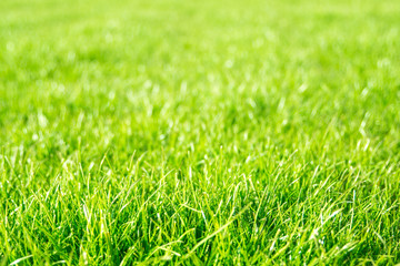 Breen Grass Background
