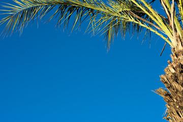 Пальма и голубое небо
