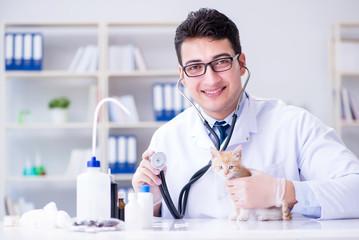 Cat visiting vet for regular check up
