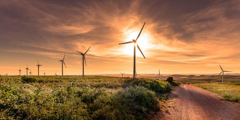 sur le haut d'une colline au coucher de soleil, un chemin de terre et des éoliennes alignées dominant un paysage en fond