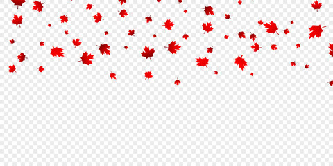 Canadian maple leaves background. Falling red leaves for Canada Day 1st July