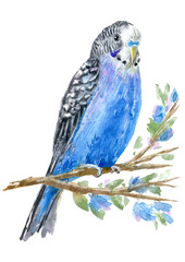Blue parrot portrait.Greeting card of a bid on a branch.Budgie.House pet.Watercolor hand drawn illustration.White background.