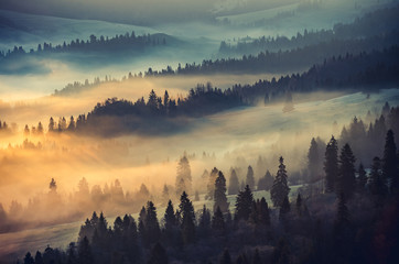 Spoed Fotobehang Ochtendstond met mist Misty mountain forest landscape in the morning, Poland