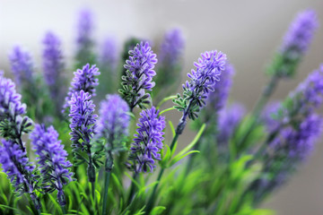 Close up of lavender bouquet, medicinal herbs and plants
