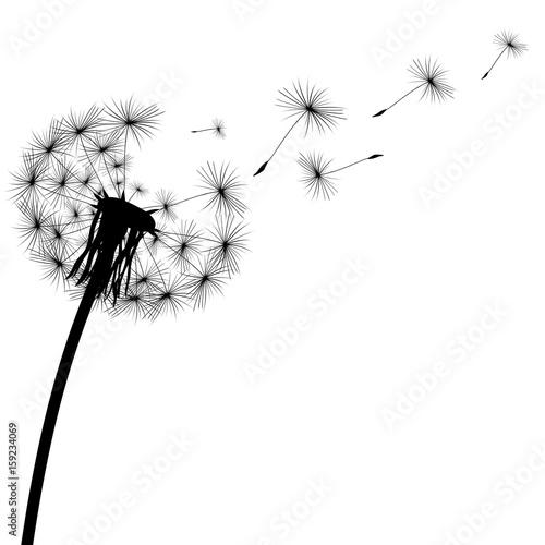 black silhouette of a dandelion