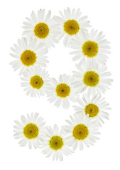 Arabic numeral 9, nine, from white flowers of chamomile, isolated on white background
