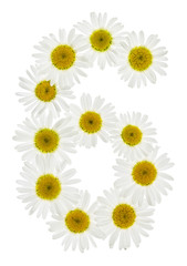 Arabic numeral 6, six, from white flowers of chamomile, isolated on white background