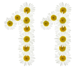 Arabic numeral 11, eleven, from white flowers of chamomile, isolated on white background