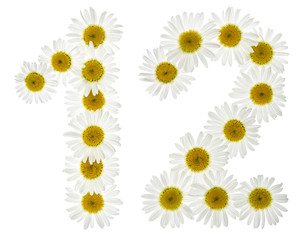 Arabic numeral 12, twelve, from white flowers of chamomile, isolated on white background