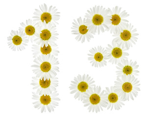 Arabic numeral 13, thirteen, from white flowers of chamomile, isolated on white background