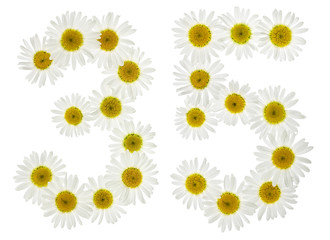 Arabic numeral 35, thirty five, from white flowers of chamomile, isolated on white background