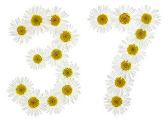 Arabic numeral 37, thirty seven, from white flowers of chamomile, isolated on white background